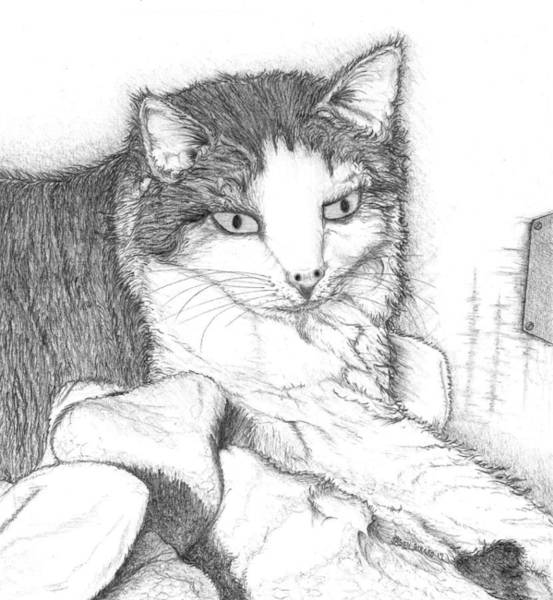 Drawing - Domestic Cat by Jason Girard