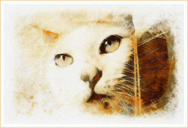 Photograph - Cat Leaves by Alice Gipson