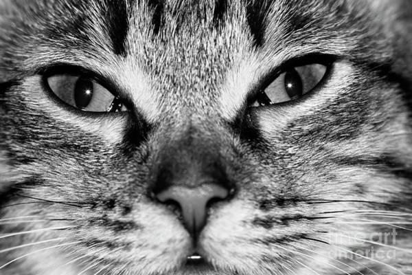 Wall Art - Photograph - cat by Michal Boubin