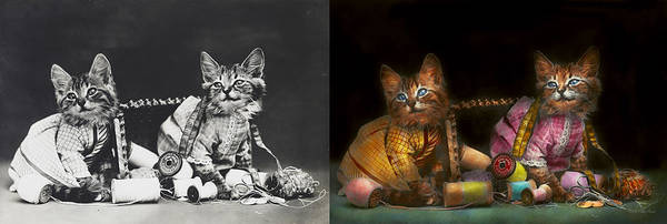 Wall Art - Photograph - Cat - Mischief Makers 1915 - Side By Side by Mike Savad