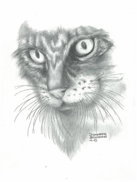 Furry Drawing - Cat My Little Annie Girl by Sharon Blanchard