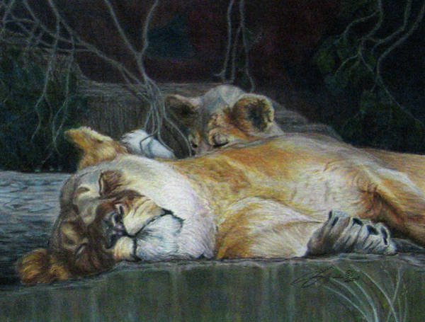 Wall Art - Drawing - Cat Nap by Beverly Fuqua