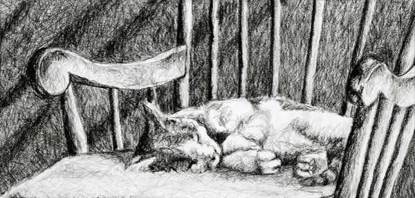 Furry Drawing - Cat Nap I by Robert Decker