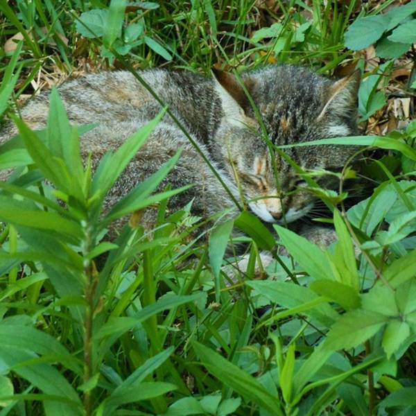 Photograph - Cat Napping...^.^* #naturephotography by Cheray Dillon
