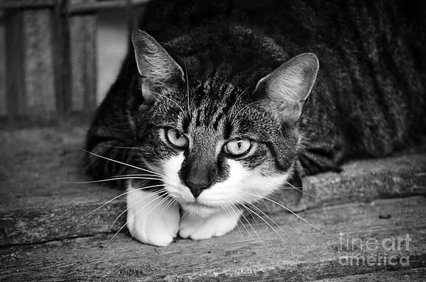 Photograph - Cat Naps 2 by Jesse Watrous