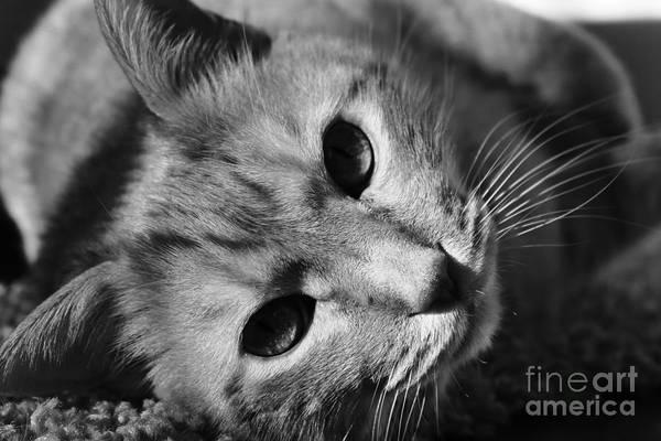 Photograph - Cat Naps by Jesse Watrous