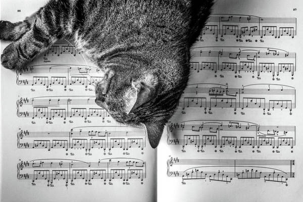 Note Wall Art - Photograph - Cat On A Piano Sheet by Lorrie Joaus