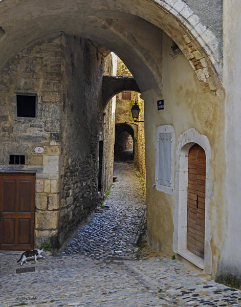 Photograph - Cat On A Quiet Street In Viviers by Allen Sheffield