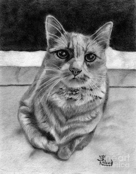 Orange Tabby Drawing - Cat On The Bed by Tracy Dupuis Roland