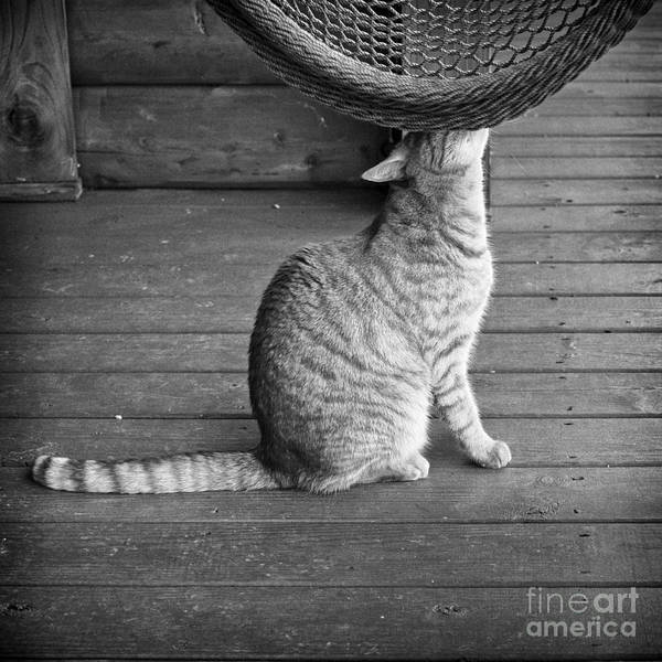 Photograph - Cat by Patrick M Lynch