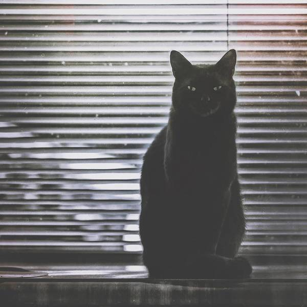 Wall Art - Photograph - Cat Portrait 1 by Wolf Shadow Photography