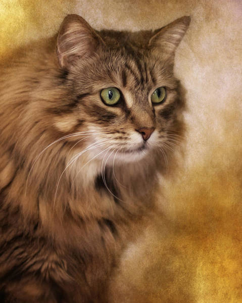 Wall Art - Photograph - Cat Portrait 2 by Wolf Shadow Photography