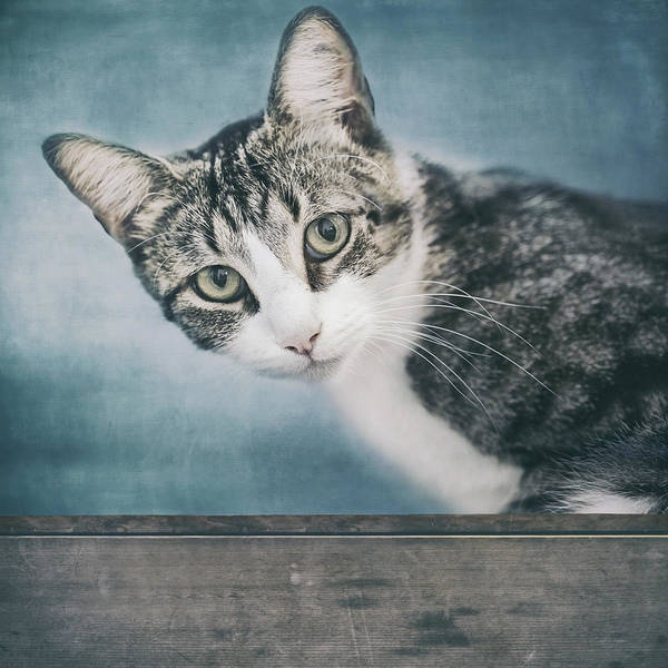 Wall Art - Photograph - Cat Portrait 3 by Wolf Shadow Photography