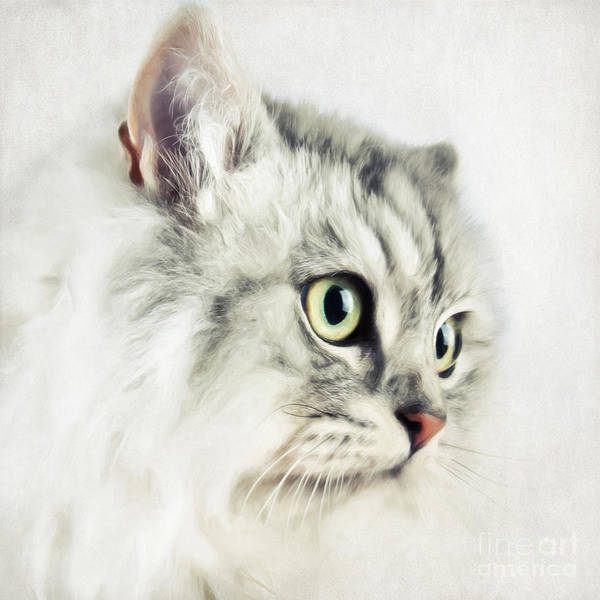 Painting - Cat Portrait by Angela Doelling AD DESIGN Photo and PhotoArt