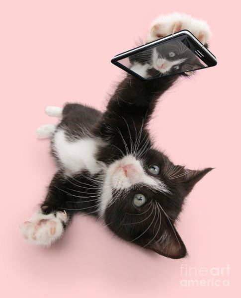Photograph - Cat Selfie by Warren Photographic