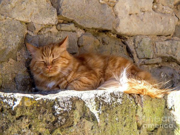 Wall Art - Photograph - Cat Sleeping by Bernard Jaubert