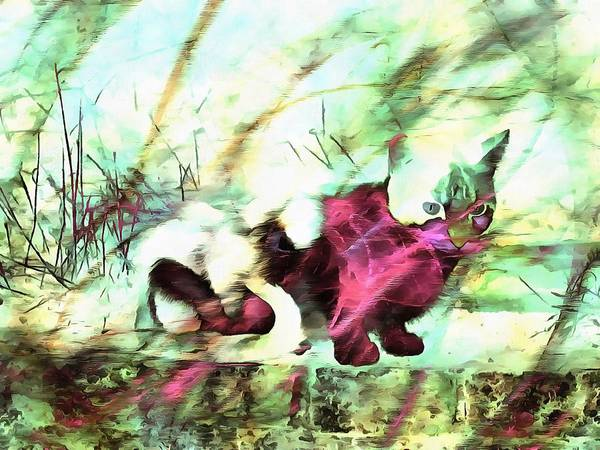 Photograph - Cat Spirit by Dorothy Berry-Lound