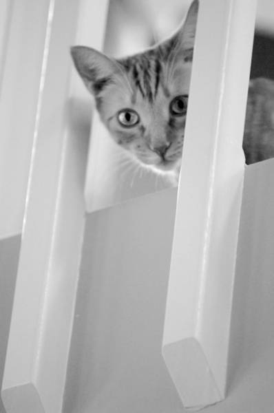 Photograph - Cat Spy Black And White by Jill Reger