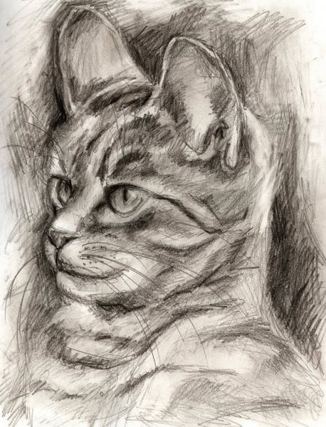 Cat Study Drawing No Three Art Print