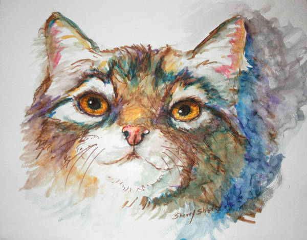 Painting - Cat Study by Sherry Shipley