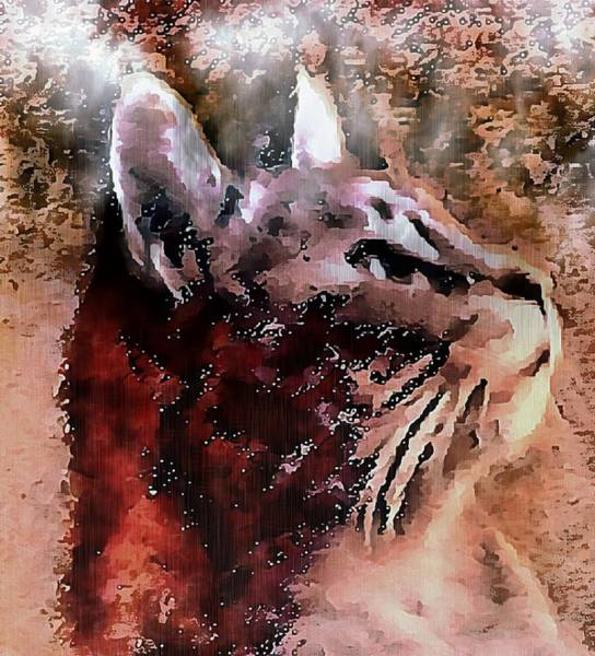 Photograph - Cat Watching Falling Rain by Dorothy Berry-Lound