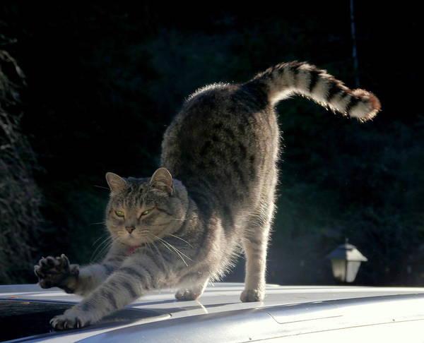 Wall Art - Photograph - Cat Yoga by Peter Mooyman