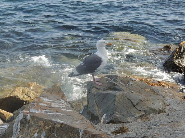 Photograph - Catalina Island Native by Helen Carson