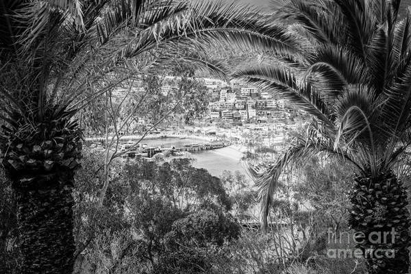 Wall Art - Photograph - Catalina Island Through Palm Trees by Paul Velgos