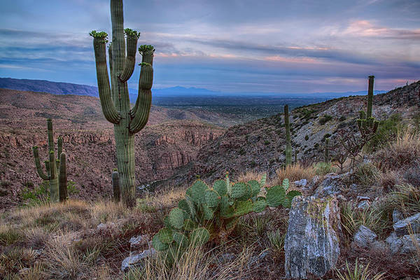 Prickly Pear Photograph - Catalina Mountains Color Sunset by Dave Dilli