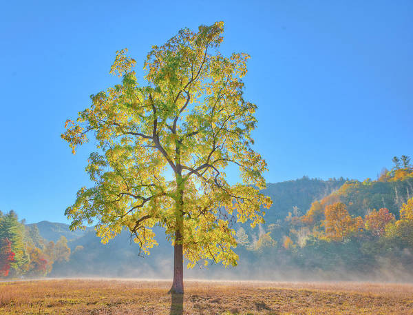 Photograph - Cataloochee Morning #2 by Rick Hartigan
