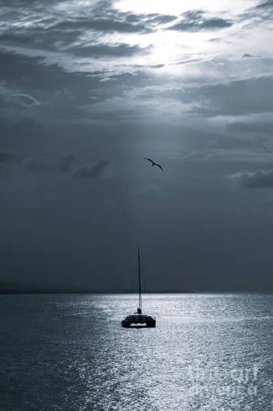 Wall Art - Photograph - Catamaran With Magnificent Frigate Bird by Jackie Follett