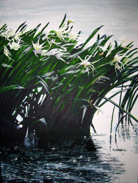 Spider Lily Wall Art - Painting - Catawba Spider Lillies by Shirley Braithwaite Hunt