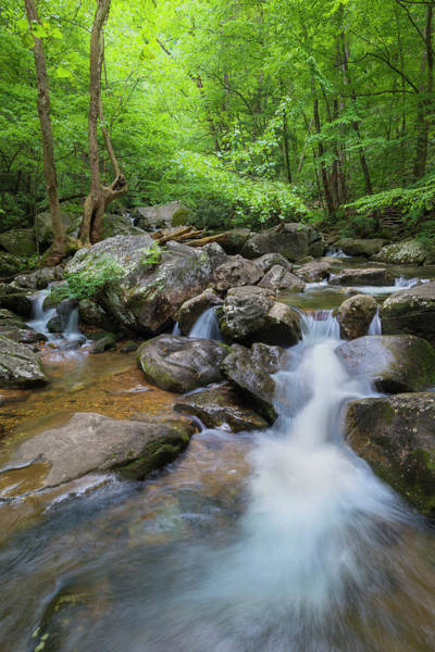 Photograph - Catawba Stream In Pisgah National Forest by Ranjay Mitra