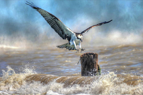 River Hawk Photograph - Catch A Wave by Donna Kennedy