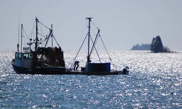 Lobstering Photograph - Catch Of The Day by Dale R Preston