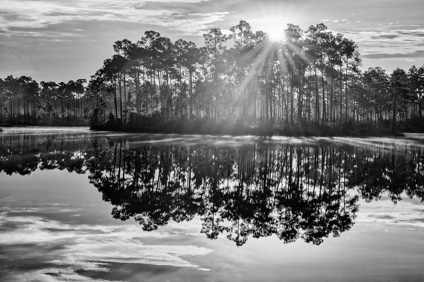 Everglades Photograph - Catch The Sun by Jon Glaser