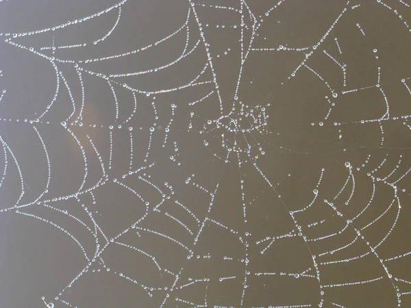 Bug Man Photograph - Catching Diamonds  by Bill Tomsa