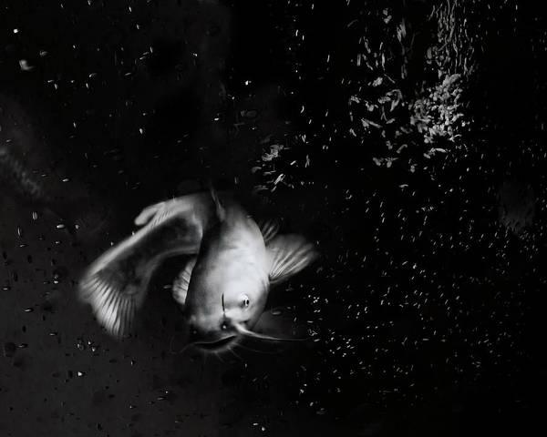 Platinum Photograph - Catfish Dance by Susan Capuano
