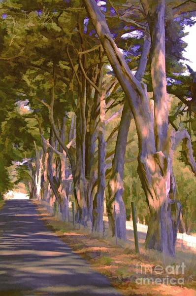 Photograph - Cathedral Of Trees by Joyce Creswell