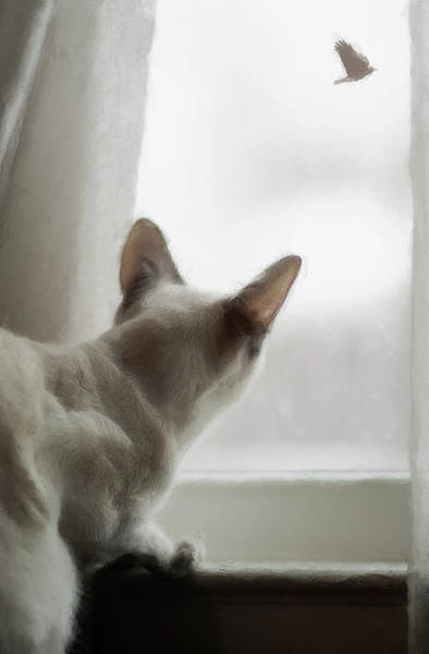 Photograph - Cat In The Window by Reynaldo Williams