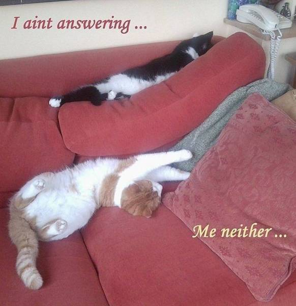 Photograph - Catnaps - 2 Lazy Cats, With Fun Wording by Julia Woodman