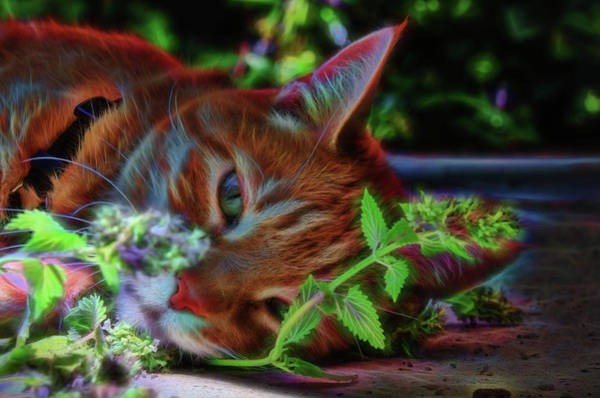 Photograph - Catnip Chillin by Beth Sawickie