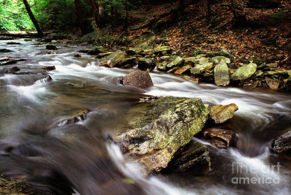 Photograph - Catoctin Mountain  by Thomas R Fletcher