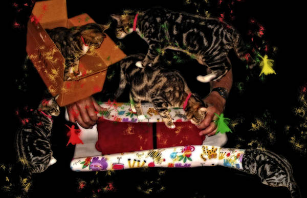 Photograph - Cats Are Ready For Christmas by Kay Brewer