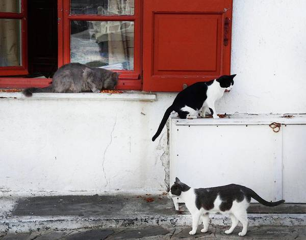 Photograph - Cats At Lunch by Coleman Mattingly