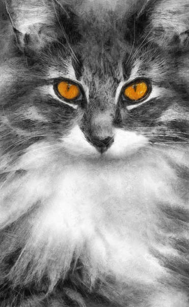 Photograph - Cats Eyes by Ian Mitchell