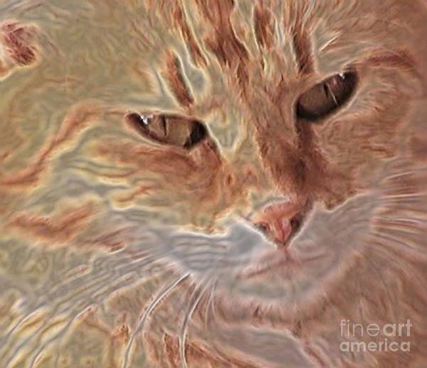 Wall Art - Photograph - Cats Know by Uldra Johnson