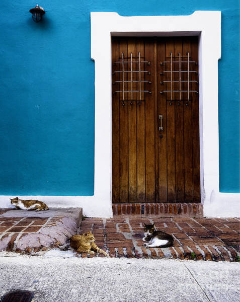 Wall Art - Photograph - Cats Of Old San Juan I by George Oze