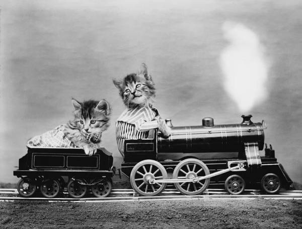 Wall Art - Photograph - Cats On A Train - The Fast Express - Harry Whittier Frees by War Is Hell Store