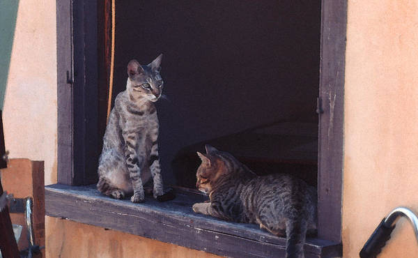 Photograph - Cats On A Window Sill - St Augustine Fl by Frank Mari